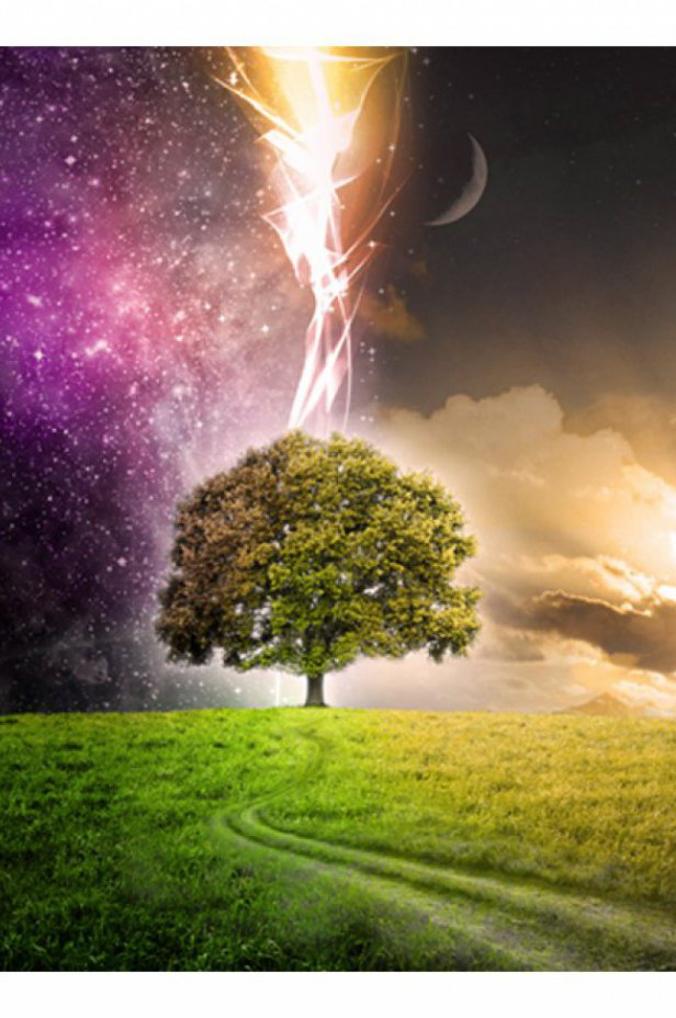 Fantasy Fototapeta - Magic tree